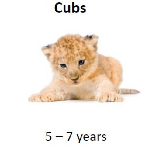 Cubs-picture
